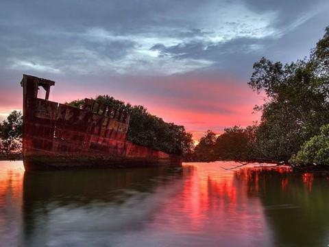 シドニーの隠された絶景「浮かぶ森」で神秘の世界を感じる