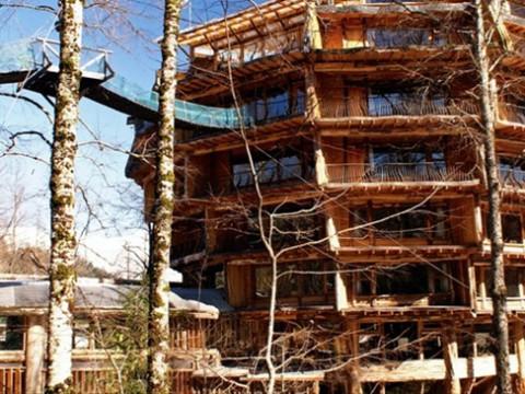 熱帯雨林に巨大な松ぼっくりホテル! スパや森林浴を楽しめるチリの「Hotel Baobab」
