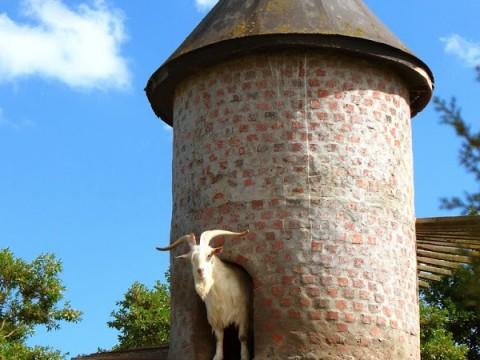 南アフリカの不思議な塔の正体はヤギの家だった!