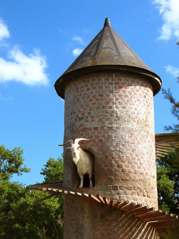goat-tower-33