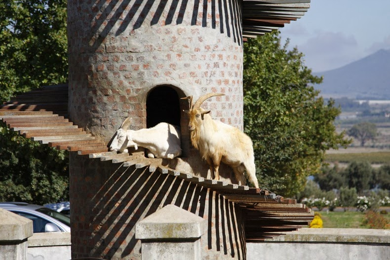 goat-tower-62