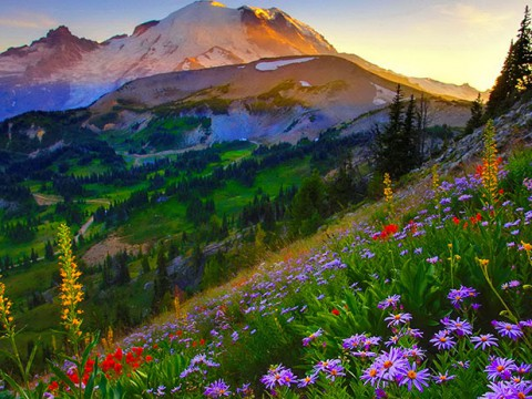 あまりにも壮大すぎるレーニア山の絶景! 川と湖と草花に癒やされる
