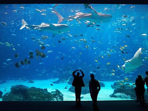 美しい海洋生物と間近で戯れられる「ジョージア水族館」