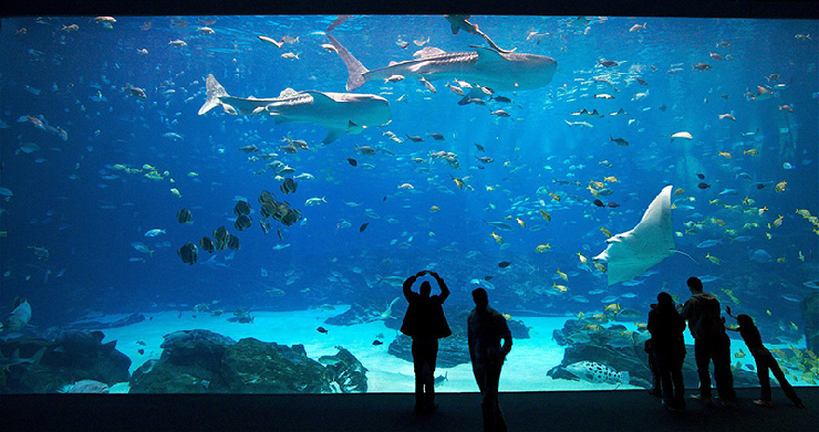 new_Georgia-Aquarium-1