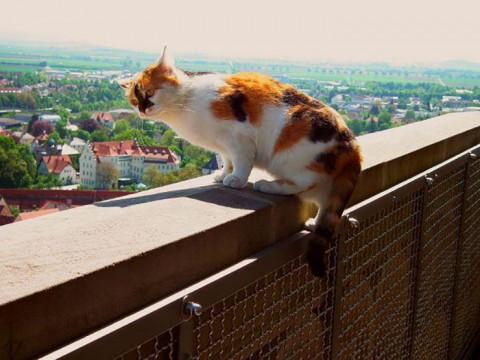 ドイツにいるニャンコ市職員が大人気 / 三毛猫ダニエルちゃんの給料はエサとベッド