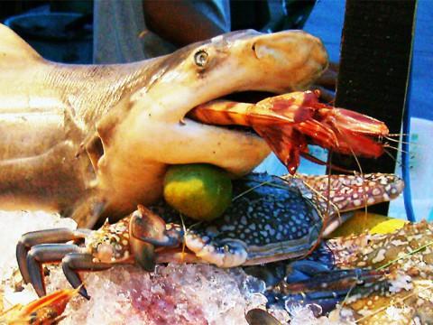 旅ばかりしてる旅マニア「俺は絶対に海外で海老だけは食わねえ! 美味いのは知ってるけど食わねえ!」