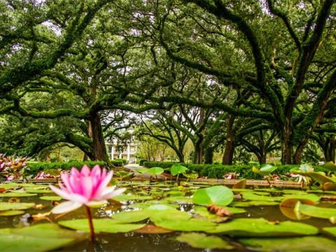 樹齢300年以上! アメリカ・ニューオリンズの絶景なる『オークアレイプランテーションハウス』が幻想的