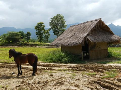 タイで一番何もないパーイ村が「最高に素晴らしい」と絶賛される理由
