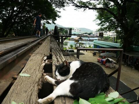 バンコクから2時間で行けるクウェー川鉄橋 / 旧日本軍が強制労働者を使い建設した泰緬鉄道