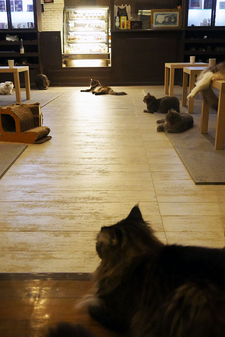 purr-cat-cafe-club10