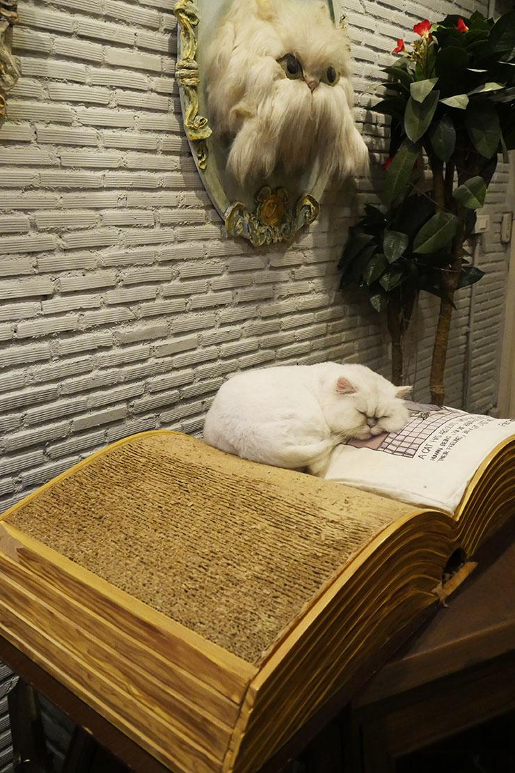 purr-cat-cafe-club2