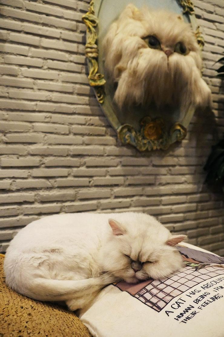 purr-cat-cafe-club3