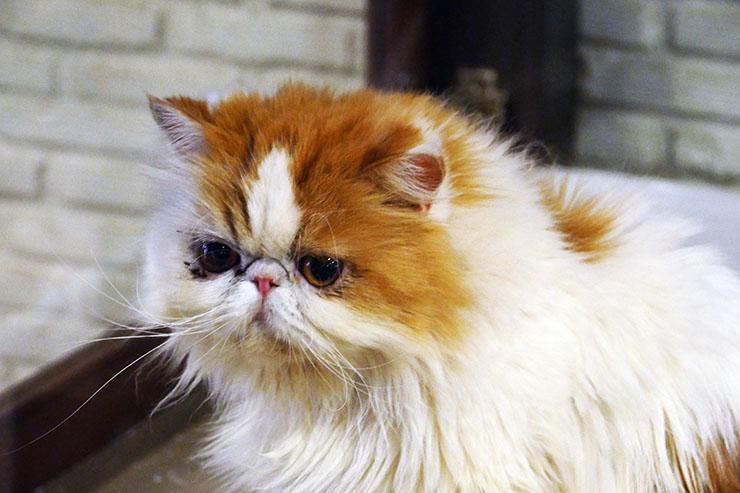 purr-cat-cafe-club4