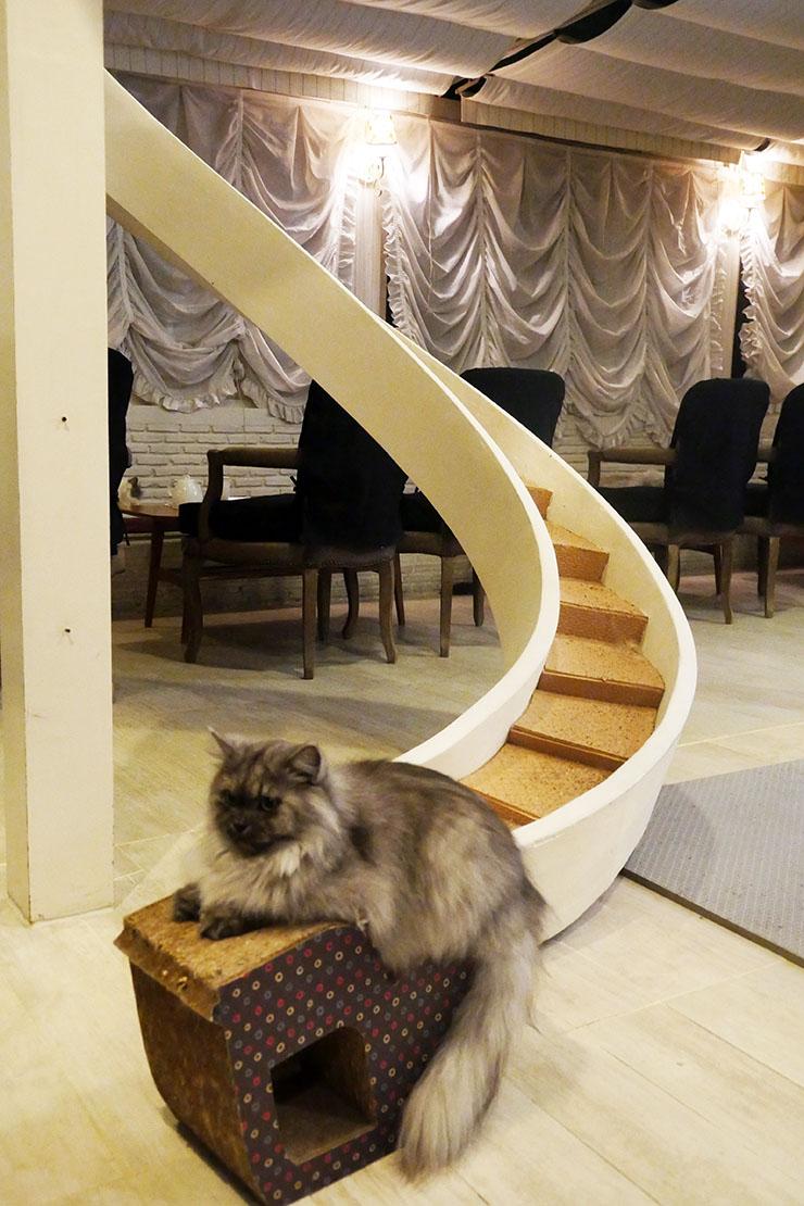 purr-cat-cafe-club6