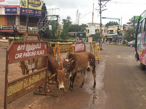 【インド旅行者必見】インド旅行の過酷さを突き付けられた5つの出来事