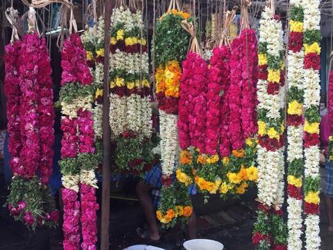 【現地取材】インド旅行は花を楽しむ旅 / 花からたどる南インドの暮らし