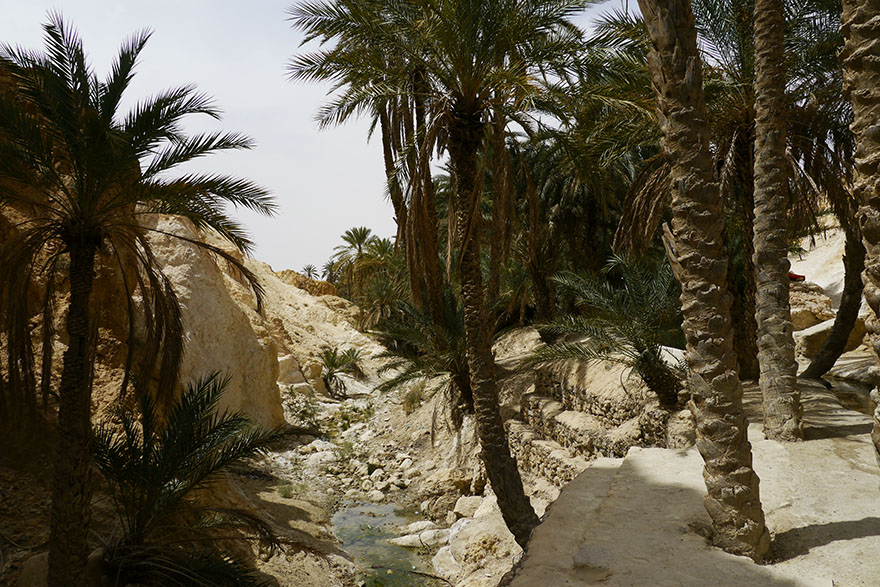 oasis10