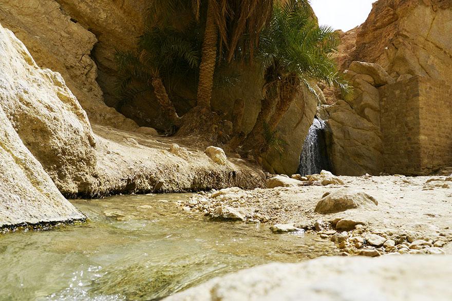 oasis5
