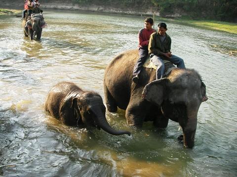 象好きによる象好きのための象パラダイス! ネパールのチトワン国立公園に行ってみよう
