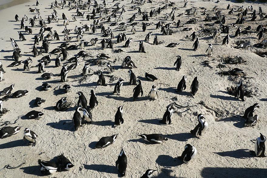 cape-town-boulders-beach02
