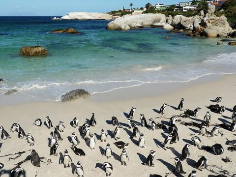 【世界唯一の絶景】美しきビーチに棲む「ペンギンの楽園」に行ってみた結果 / 南アフリカ・ボルダーズビーチ