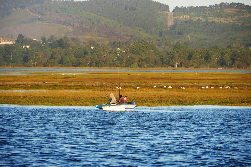 south-africa-knysna-oyster17