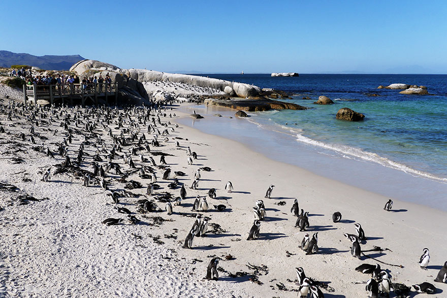 south-africa-sushi18