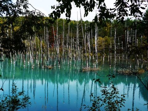 【絶景】あまりにも美しすぎる北海道の絶景「美瑛白金青い池」の姿 / 美瑛町