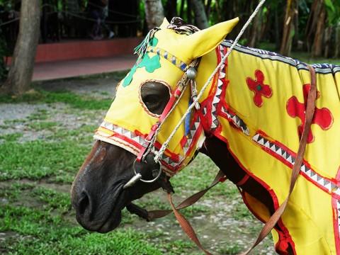 マレーシアのコタキナバルには服を着た馬がいる!! 実は伝統的なカッコイイウマだった件