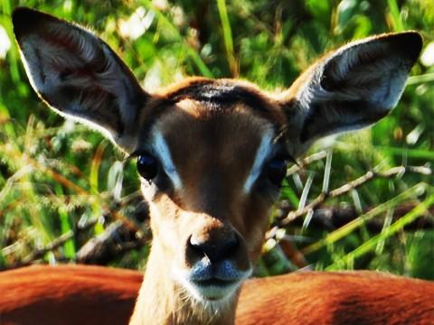 【動物いっぱい】本物の「野生動物」を観に行こう! 南アフリカで体験できるサファリが凄すぎる件