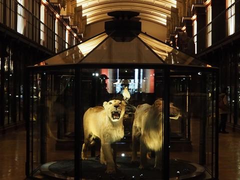 パリの穴場スポット・国立自然史博物館がまるでナイトミュージアム!?