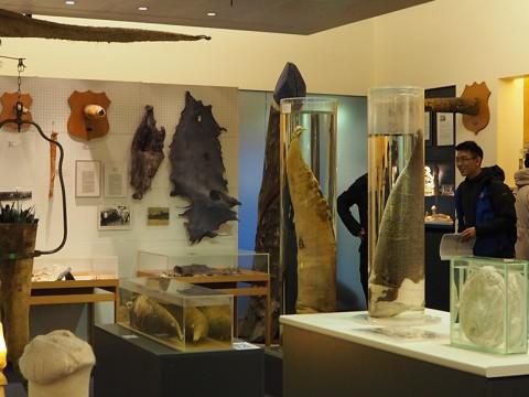 【閲覧注意】世界にここだけ!超クレイジーアートが観れるアイスランドの博物館