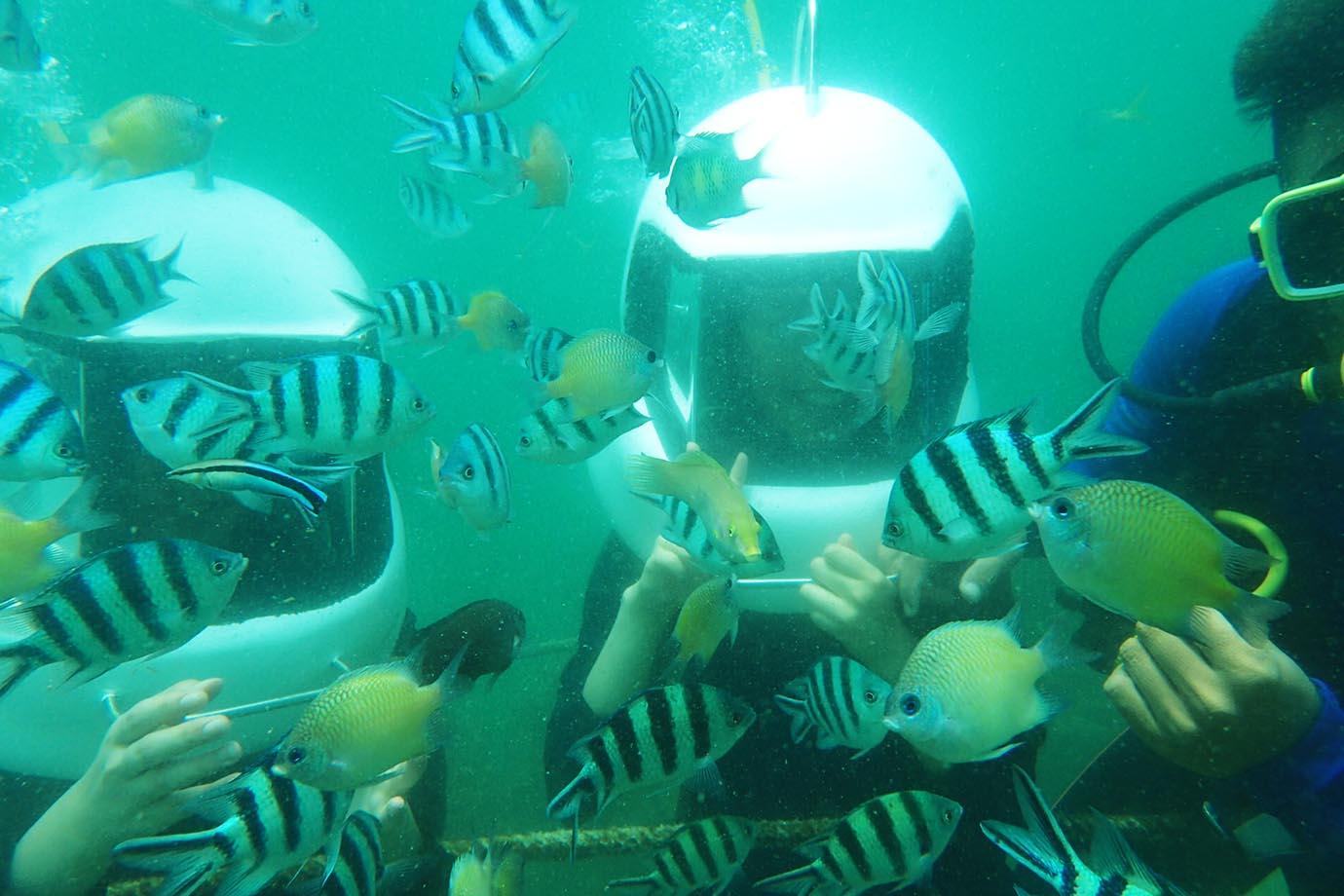 diving-in-kota-kinabalu11