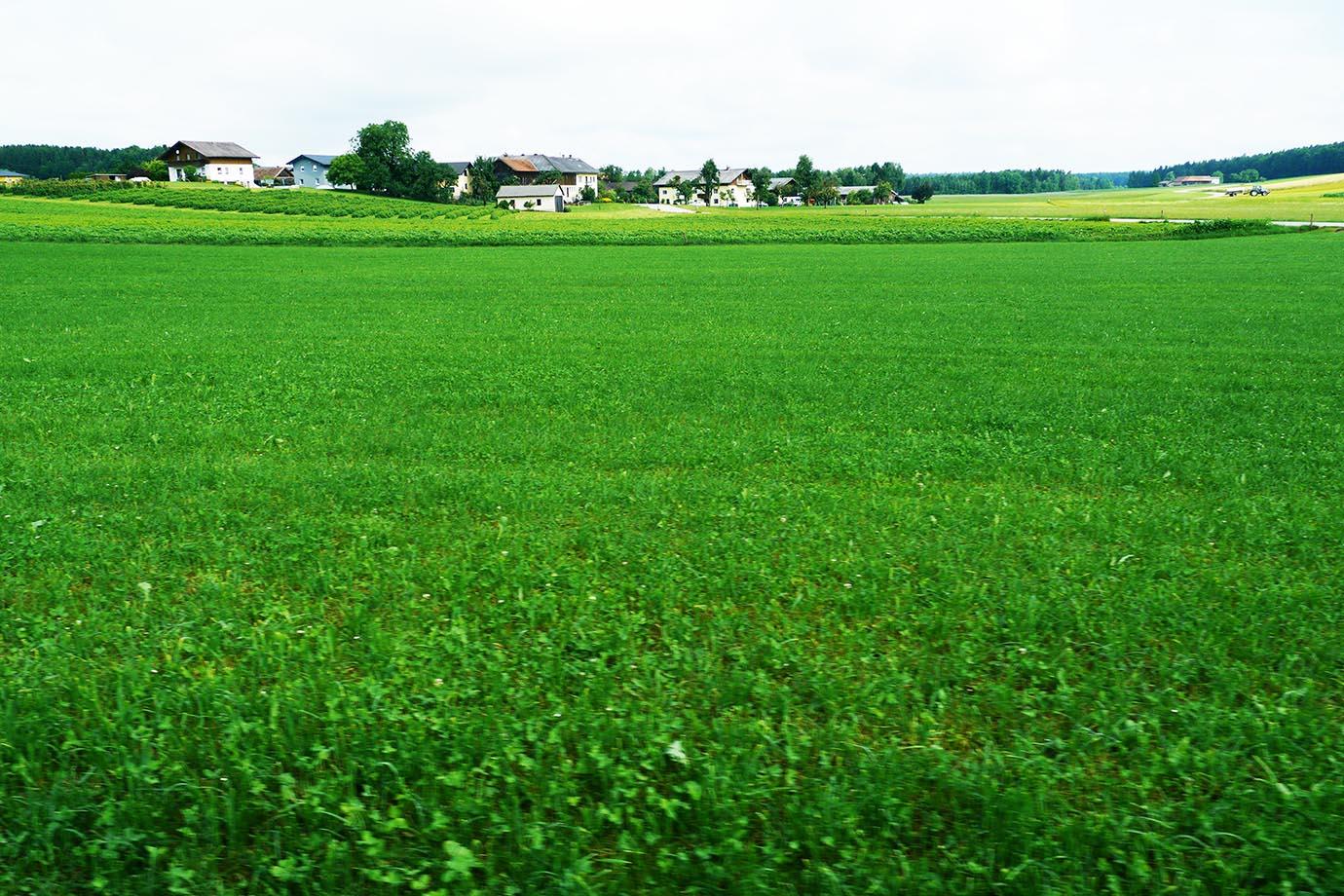 healed-in-an-austrian-village4