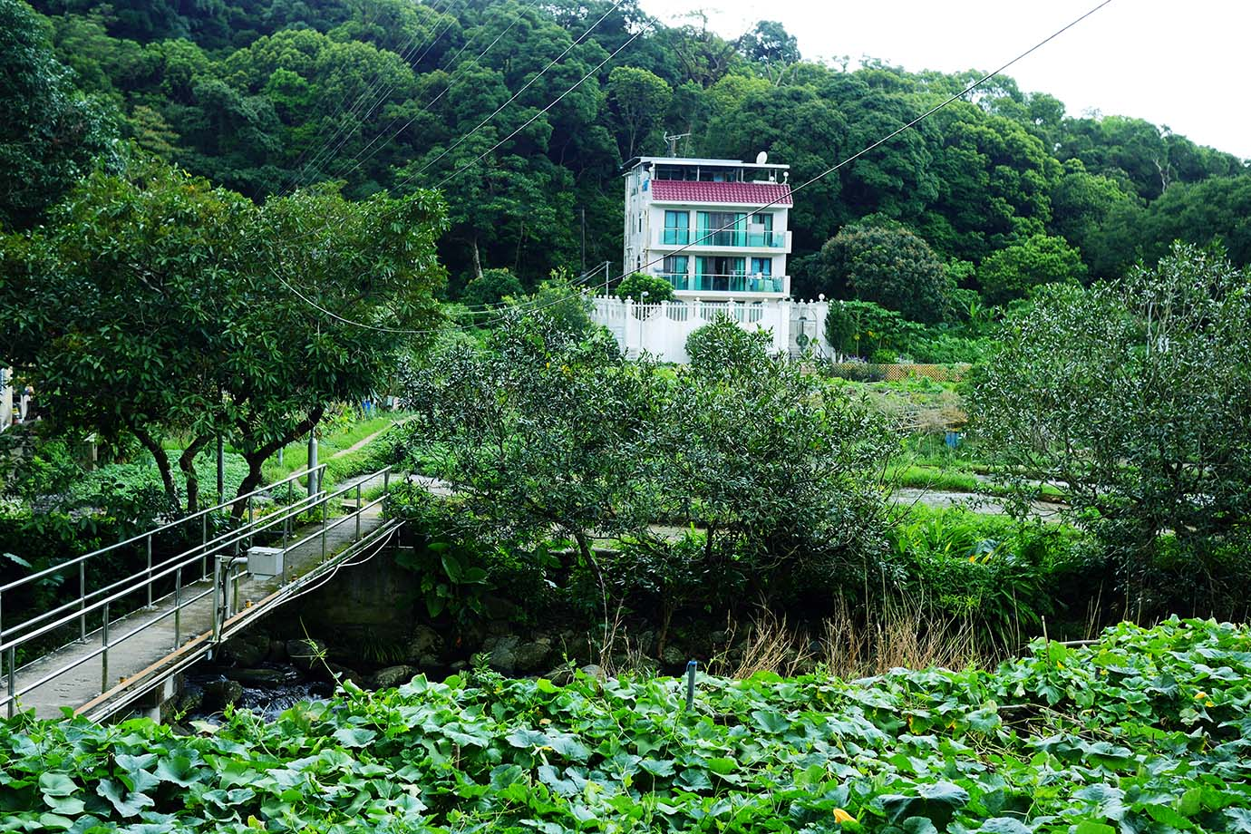 hongkong-duanji-tea-house5