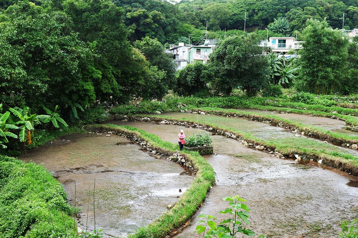 hongkong-duanji-tea-house6