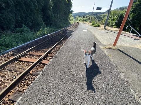 【駅猫リポート】忘れ去られた駅で暮らす猫たち / ホームで乗客を見送り「特牛駅」