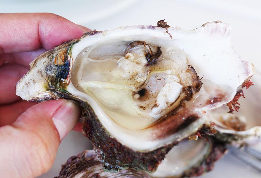 south-africa-knysna-oyster6